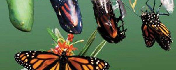 cropped-birth-of-a-butterfly-pictures1.jpg
